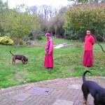 Monks in garden with dogs